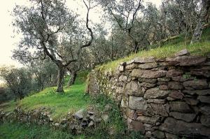Olive Grove, Tuscany' Photo by Davide Rizzo via Flickr